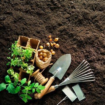 Premium Organic Soil