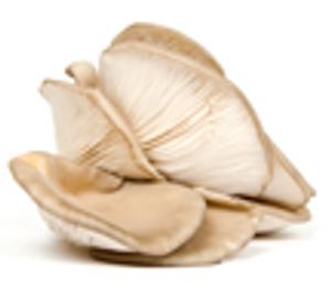 Mushroom - Oyster