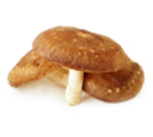 Mushroom - Shitake