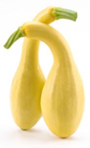Squash - Gold/Yellow