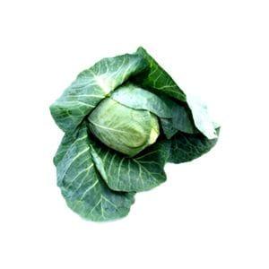 Cabbage - Sugarloaf