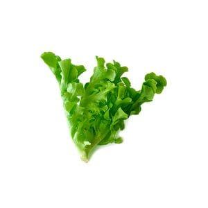 Lettuce - Mignonette