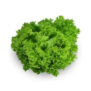 Lettuce - Coral Green