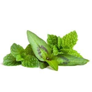 Mint - Vietnamese
