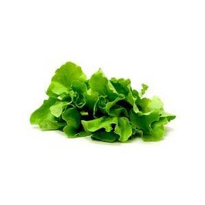 Lettuce - Butter Green