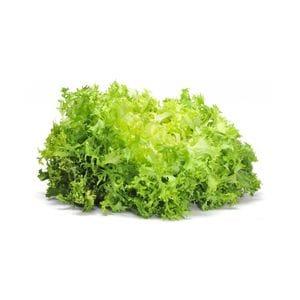 Lettuce - Endive