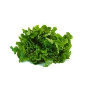Lettuce - Green Oak