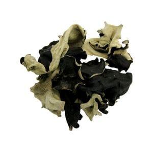 Mushroom - Black Fungus