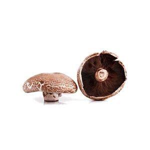Mushroom - Portabello