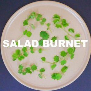 Salad Burnett