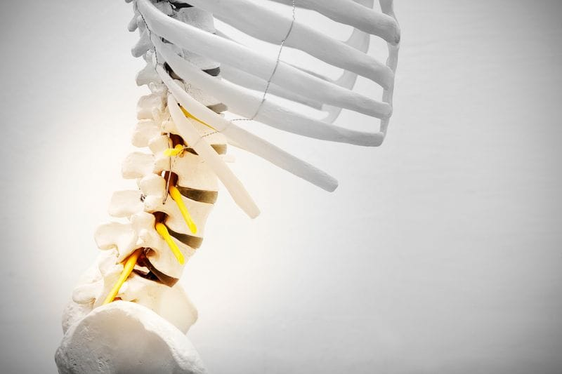 A Short Guide To The Thoracic Spine