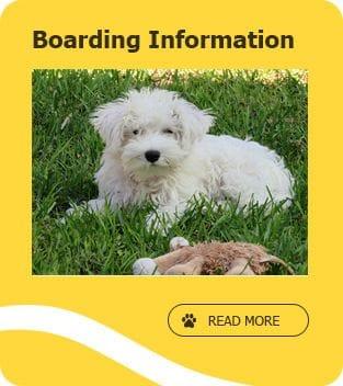Dog kennels Jandakot, Pet boarding near Canningvale, dog boarding Cockburn
