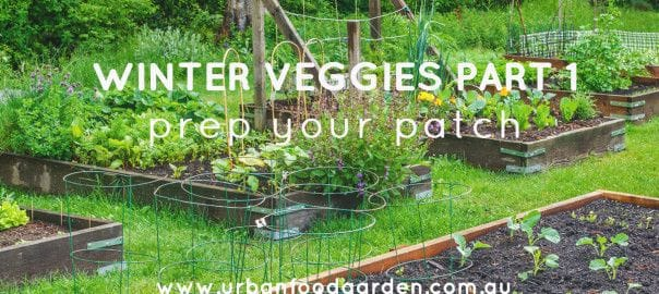WINTER VEGGIES PART 1: PREP YOUR PATCH