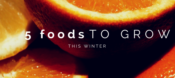 5 Foods To Grow This Winter