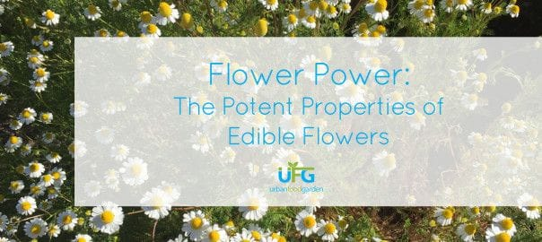 Flower Power: The Potent Properties Of Edible Flowers