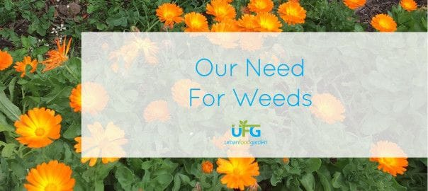 Our Need For Weeds