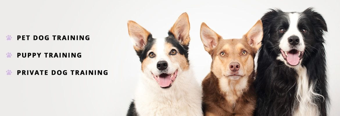 class information woof and wags pet dog training central coast