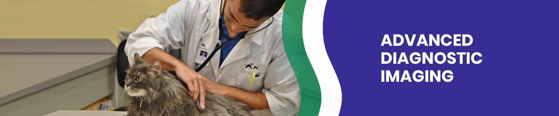 Advanced Diagnostic Imaging | Veterinary Specialist Services