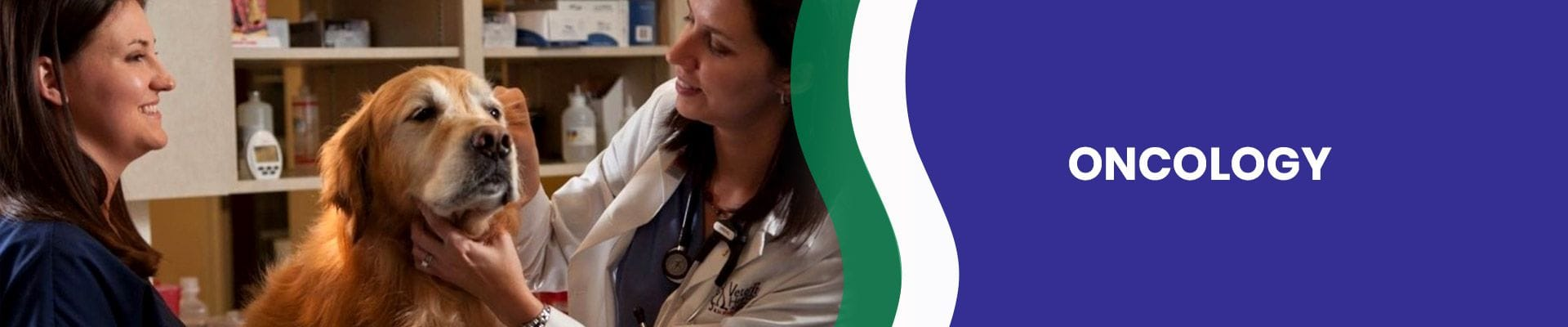 Animal Oncology | Brisbane & Gold Coast Vets