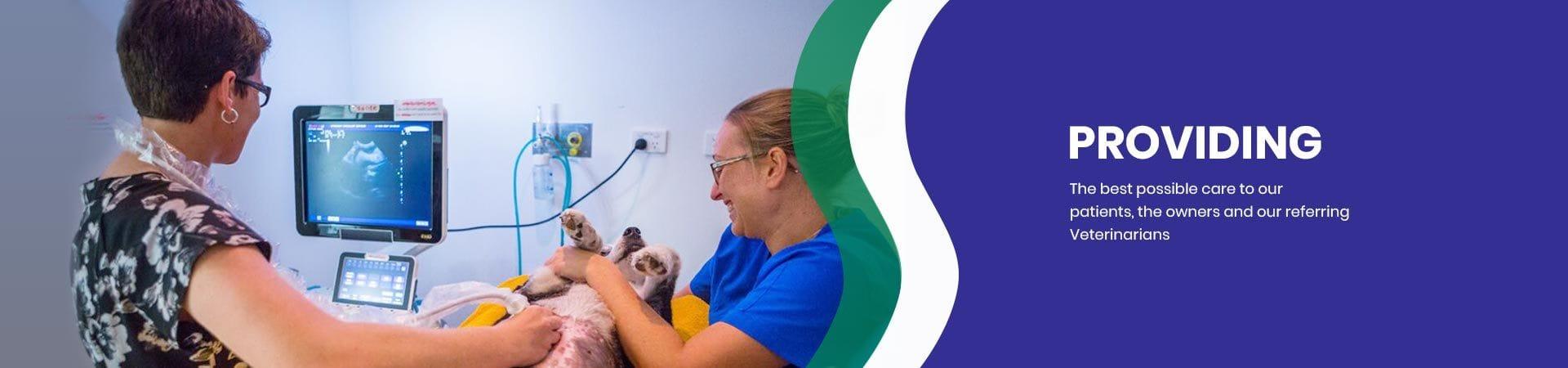 Animal Nursing Care | Gold Coast Vet