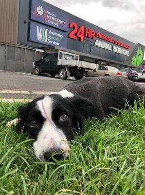 Dog in front of VSS Underwood
