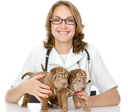Gold Coast Veterinarian