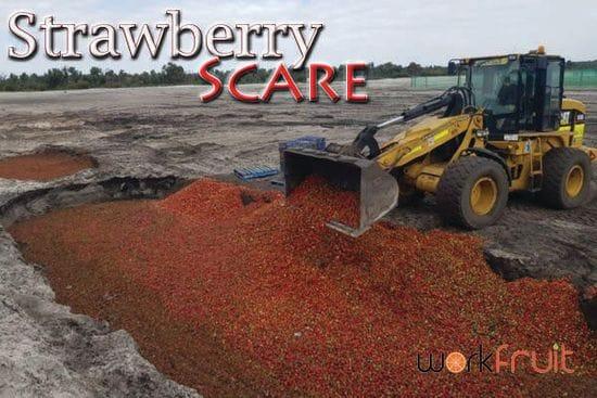 A Strawberry Shame