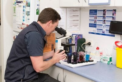 Terrigal Vet can perform an array of diagnostic tests that help us care for your pet