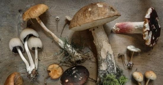 What are Medicinal Mushrooms?