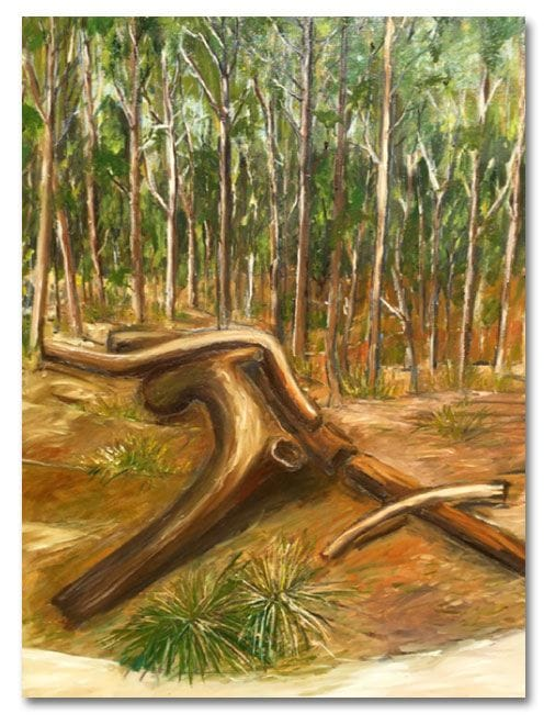 The garden-park forest, Noosa Camino reflection site 2