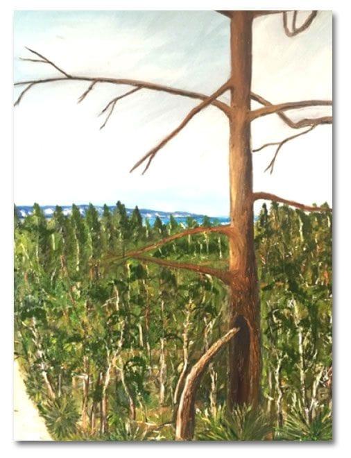 The Pierced Pine, Noosa Camino reflection site 4
