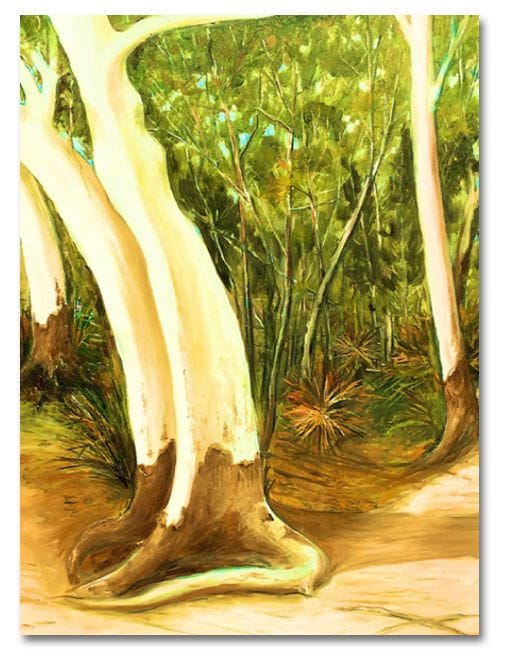 White Gums, Noosa Camino reflection site 6