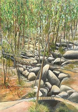 Rocks in the rainforest valley, Noosa Camino