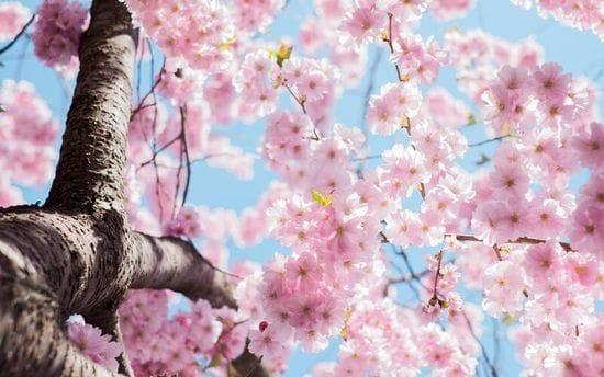 Spring Specials