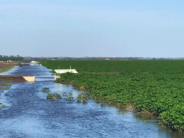 Flooded irrigation chanel from a recent project.