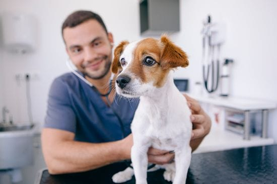 How Your Independent Veterinary Clinic Can Keep Up With the Franchises