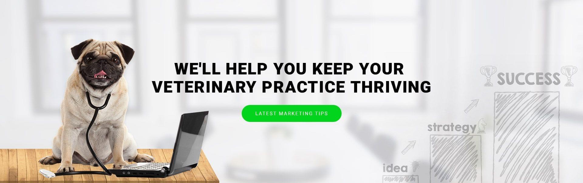 Vet Marketing Services | Websites, Email Marketing, Content Writing, Digital Marketing