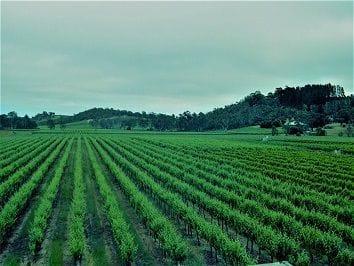 Boutique Vineyard