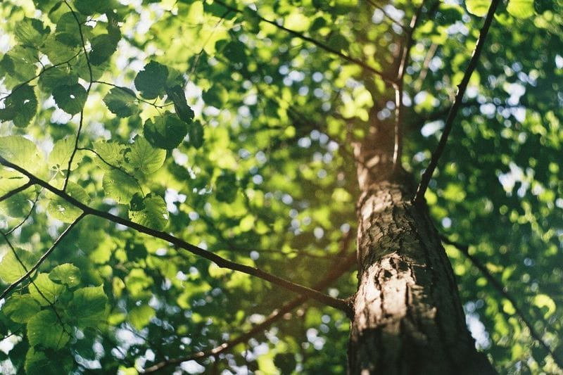 Paper made from sustainable forests is needed to start the paper cycle
