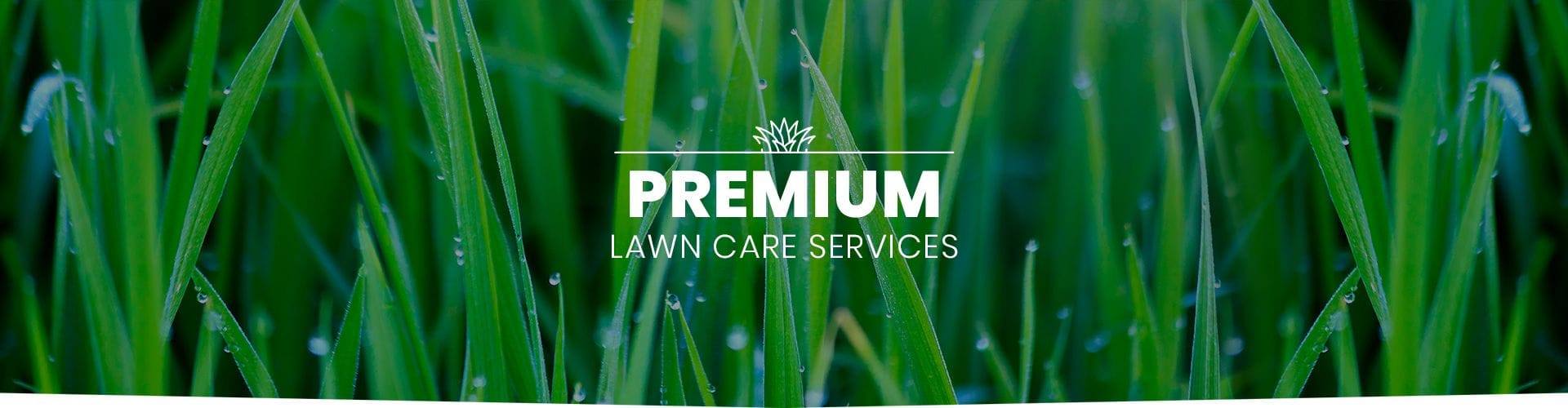 Premium Lawn Care Services Geelong & Bellarine Peninsula