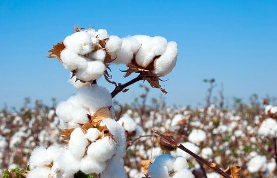 Why Organic Cotton?