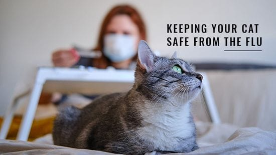 Keeping Your Cat Safe From the Flu