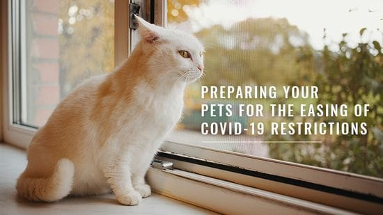 Preparing Your Pets For The Easing Of COVID-19 Restrictions