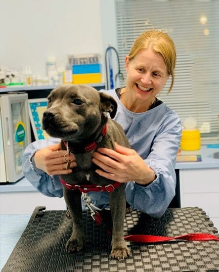 Vaccinations | Health Care Services | North Road Vet