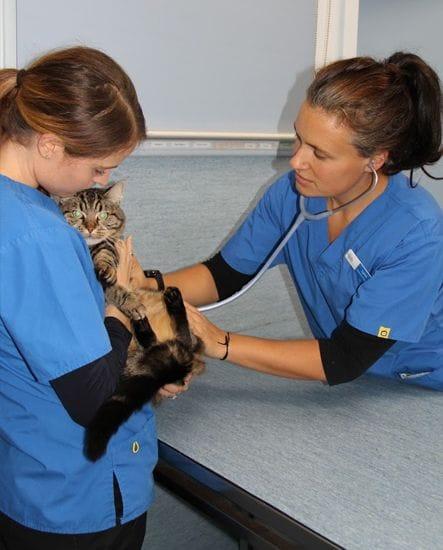 Wellness Plans   Pet Health Checks   North Road Veterinary Centre
