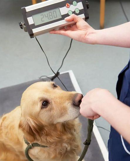 Pet Weight Loss Programs | Animal Wellness & Wellbeing | North Road Vet