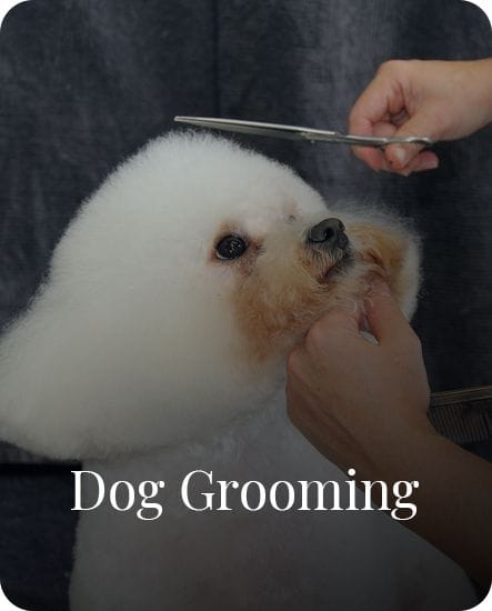 Dog Grooming in Gardenvale