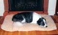 Snoozy Comforter
