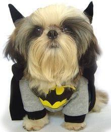 BATMAN DOG COSTUME