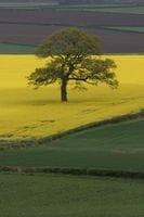 Spring in Hereford